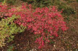 Omgeving Herfstkleur rood
